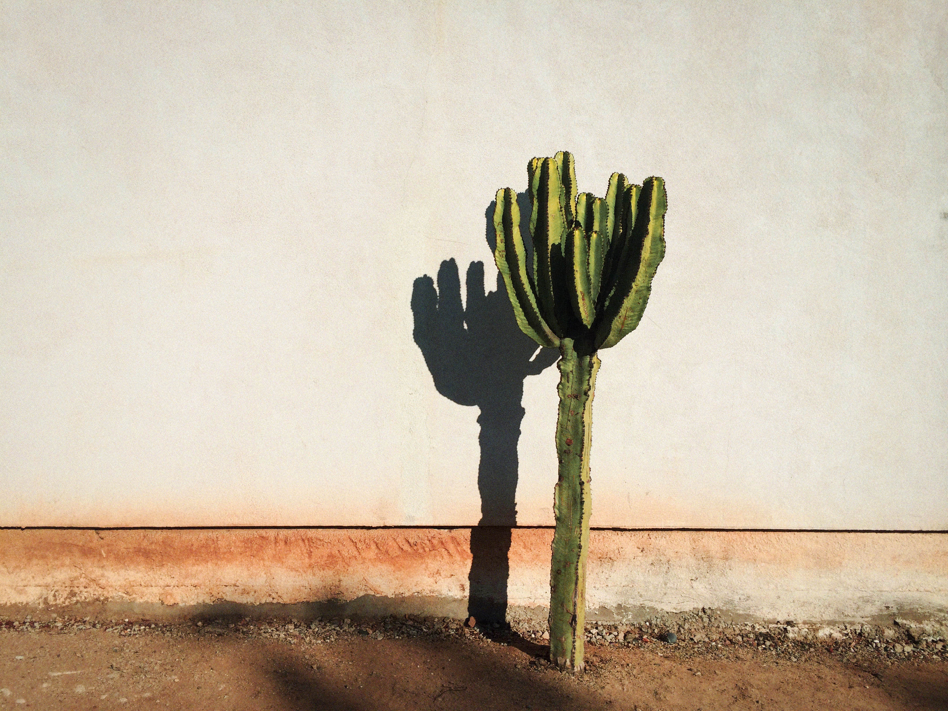 Cactus shadow on a wall, by David Trawin