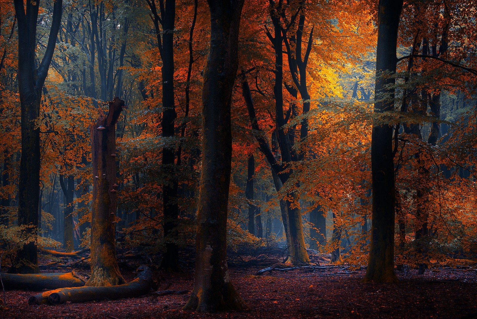 Under the forest in autumn