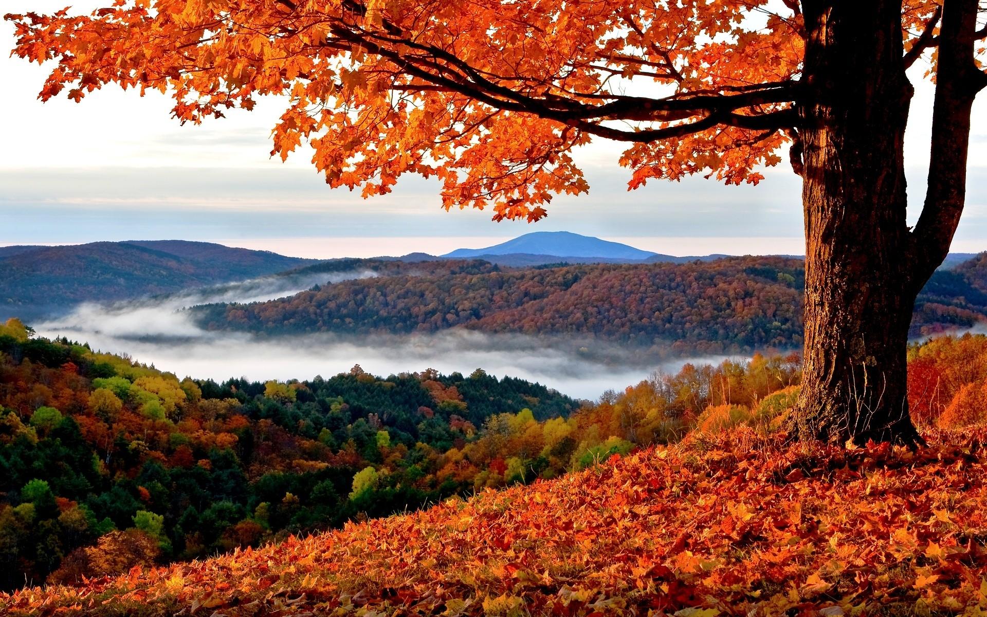 Autumn - landscape