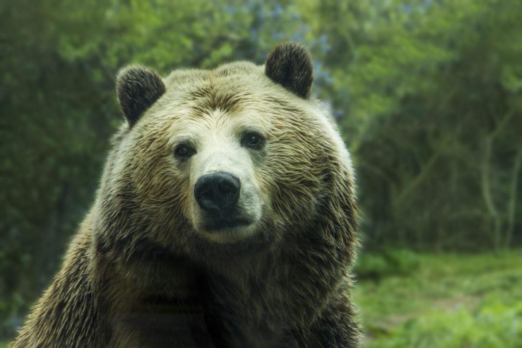 Bear, by Jessica Weiller.