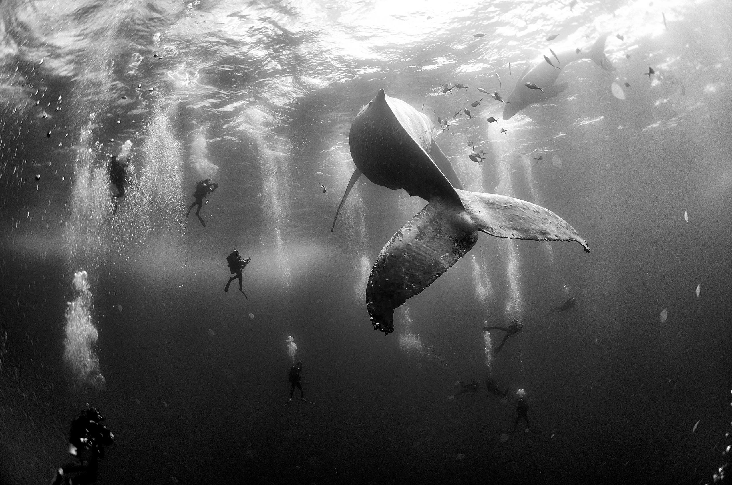 Whales and divers