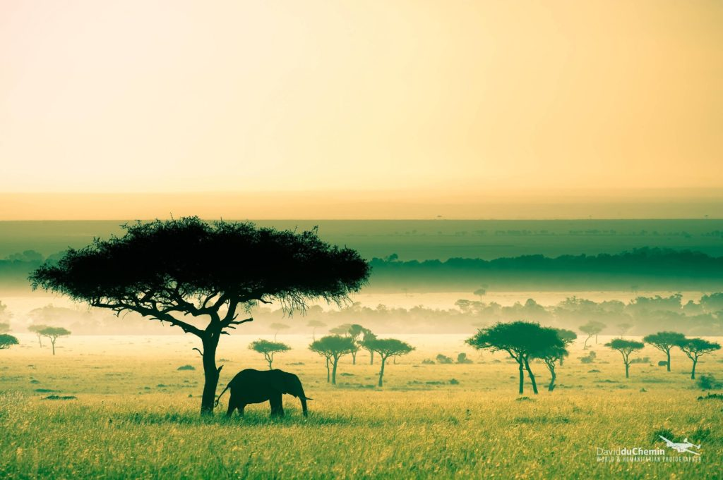 Savanna in Kenya, by David Duchemin