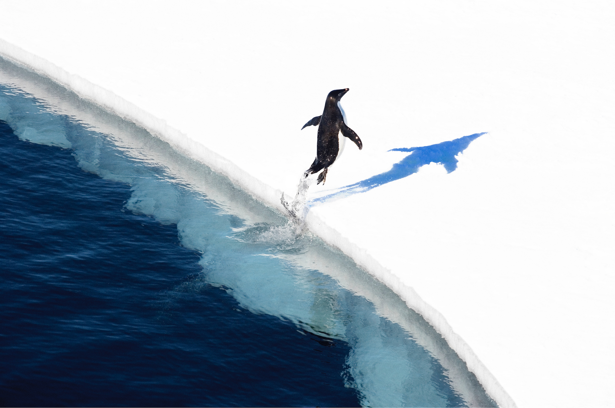 Penguin Leaping