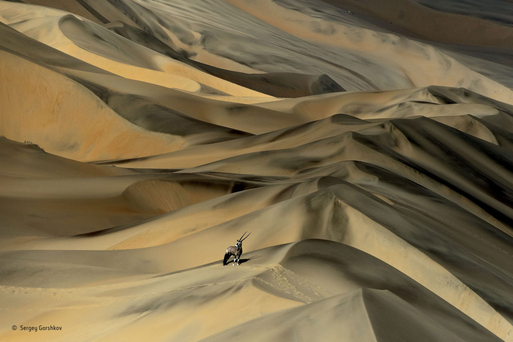 Desert survivor, by Sergey Gorshkov