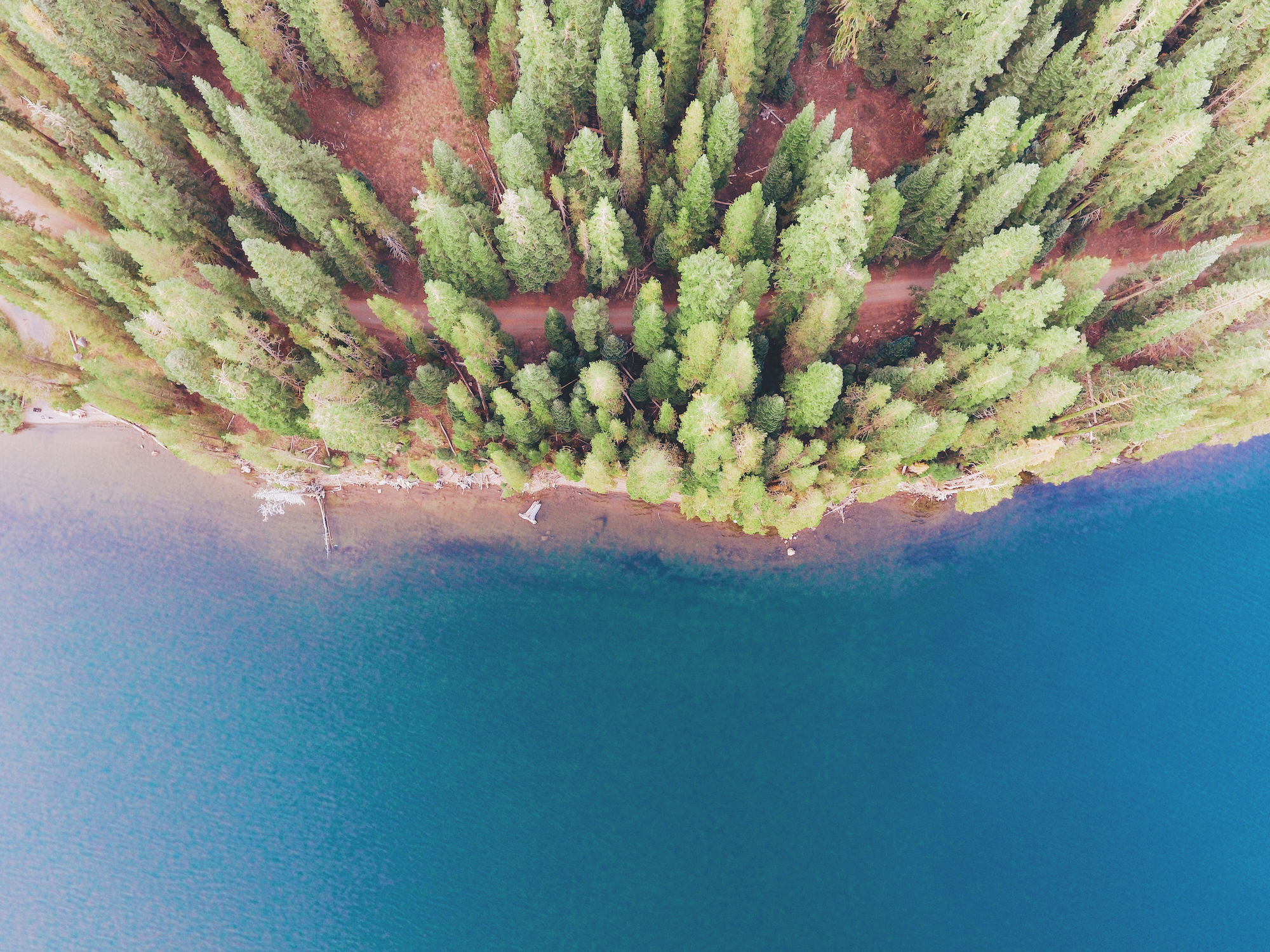 Forest from above, by Will Stewart