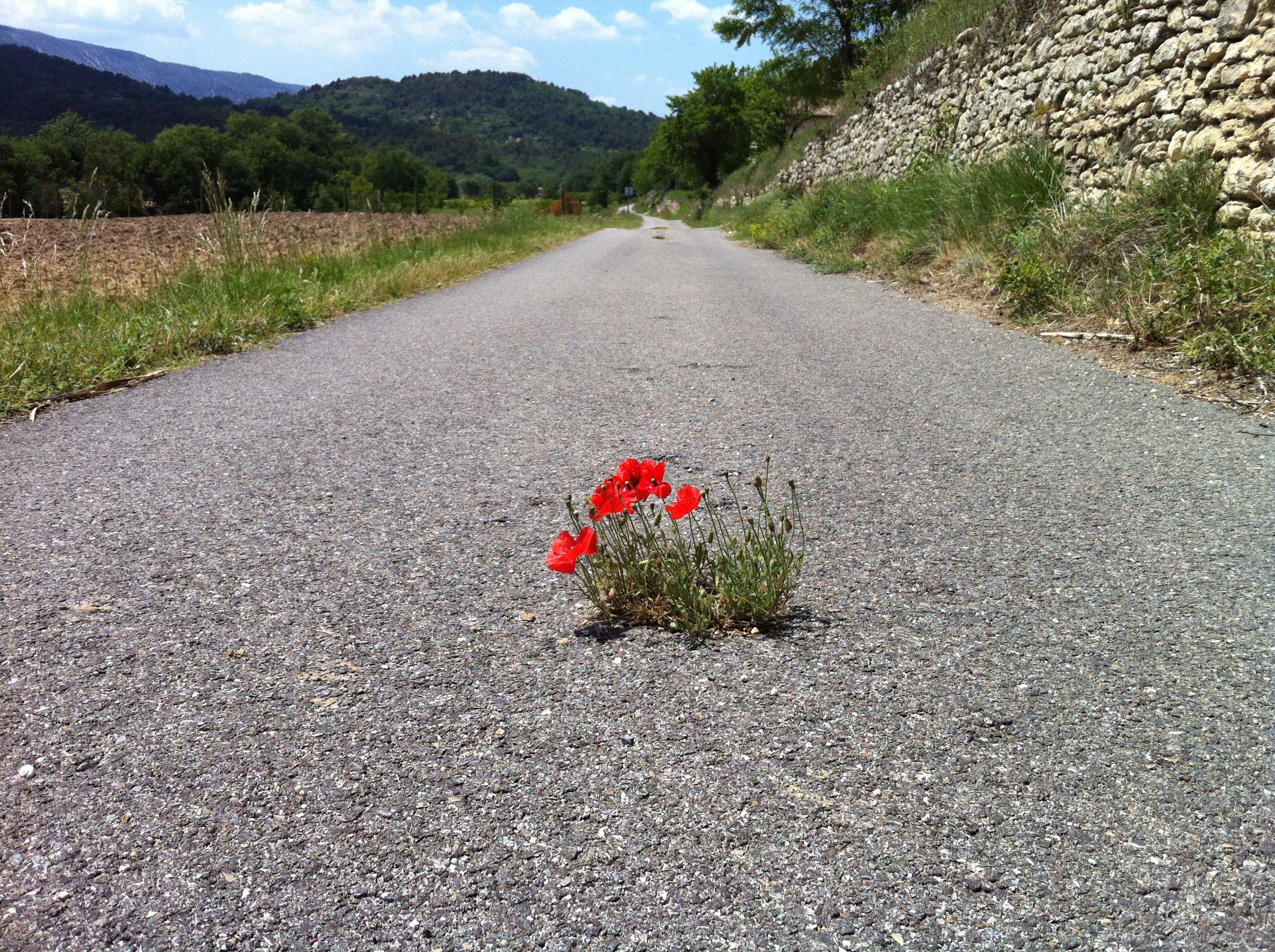 Luberon, France, 26 mai 2012