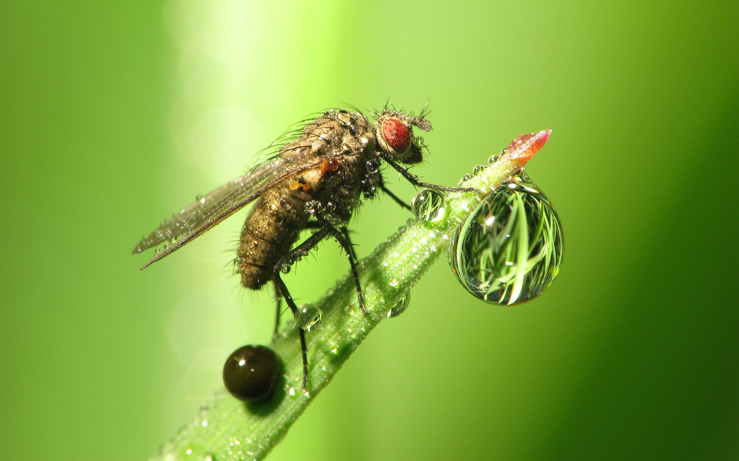 Fly and Drops