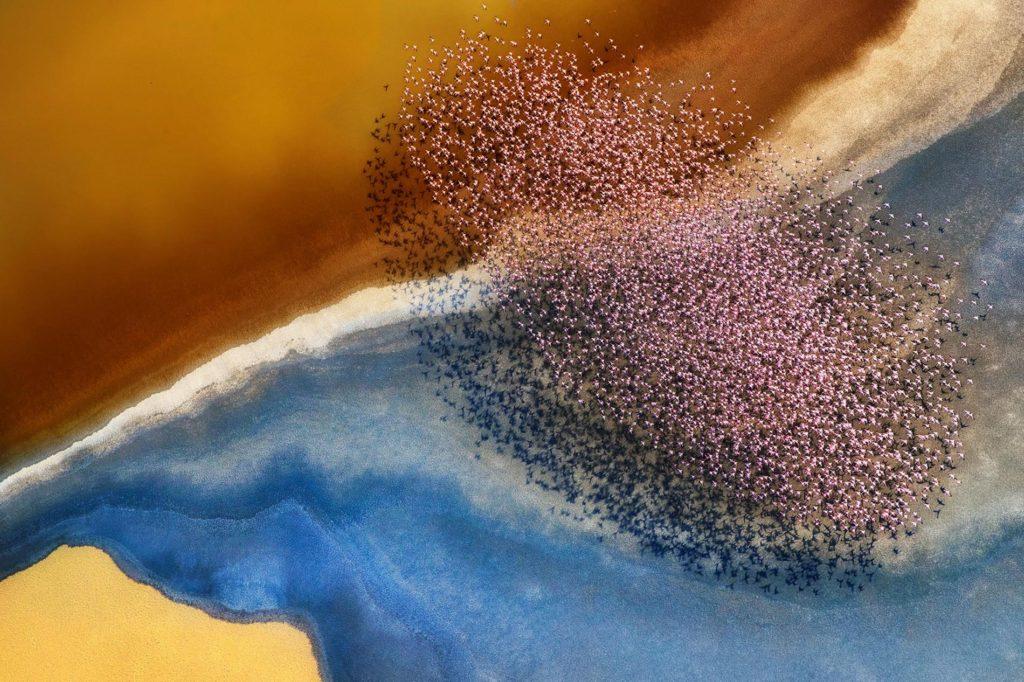Flamingos, Lake Natron, Tanzania