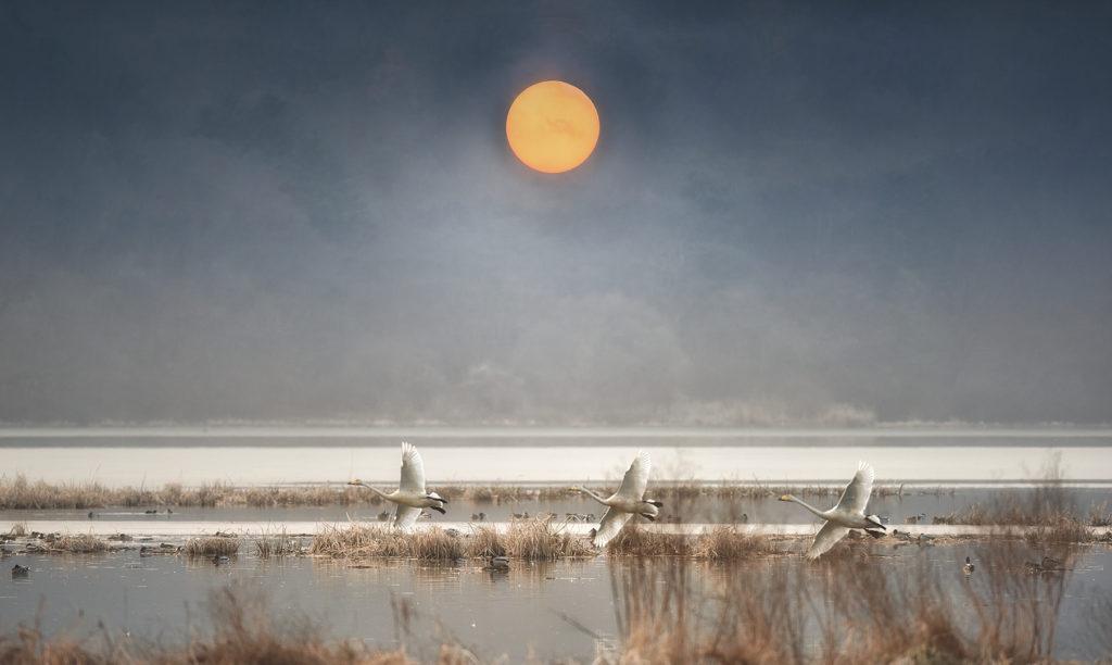Birds and Sun