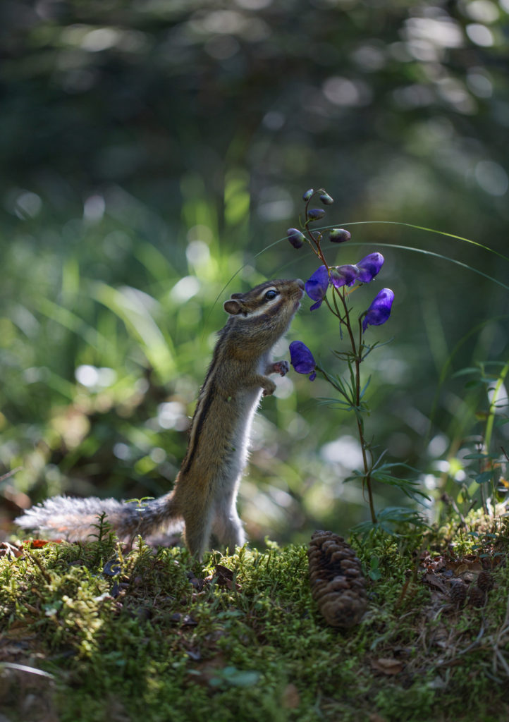 Romantic squirrel