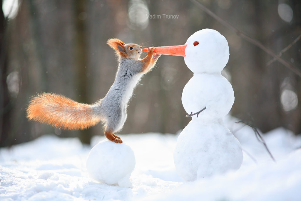 The squirrel and the snowman