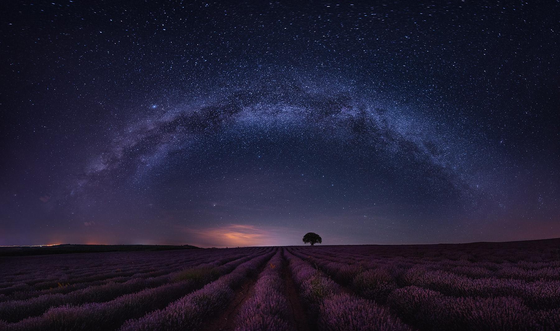 Lavender in Bulgaria