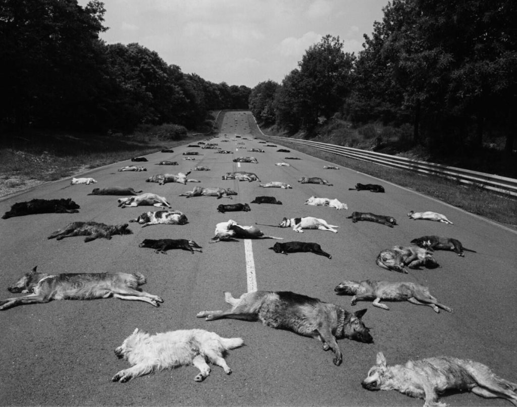 Abandoned dogs on the summer road