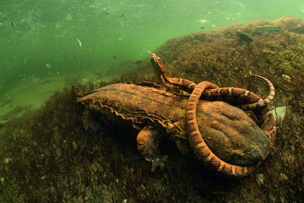 Combat underwater