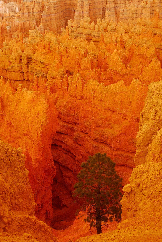 Hoodoos, Bryce Canyon