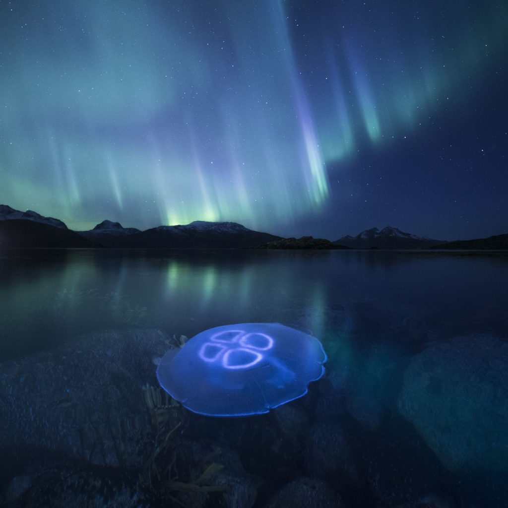 Jellyfish under aurora