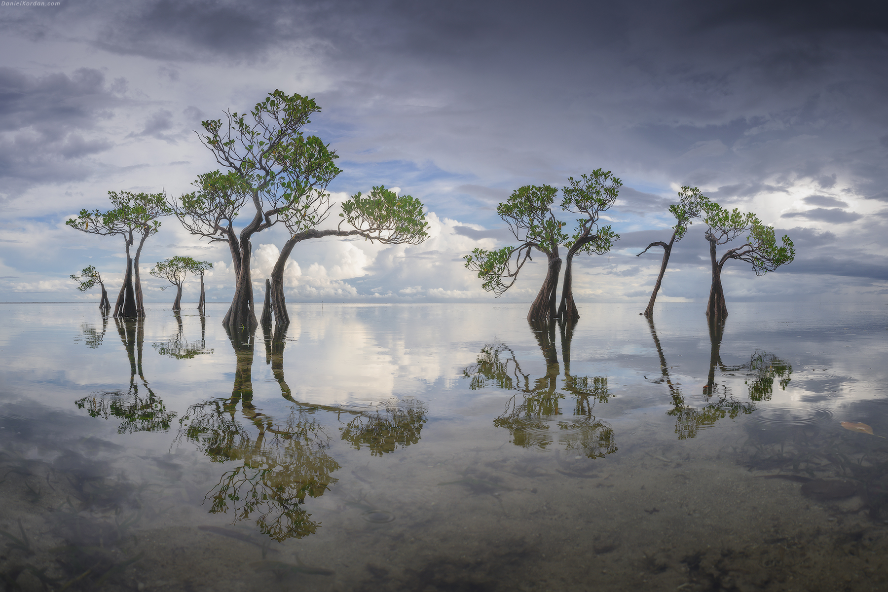 Sumba dancing trees, Indonesia