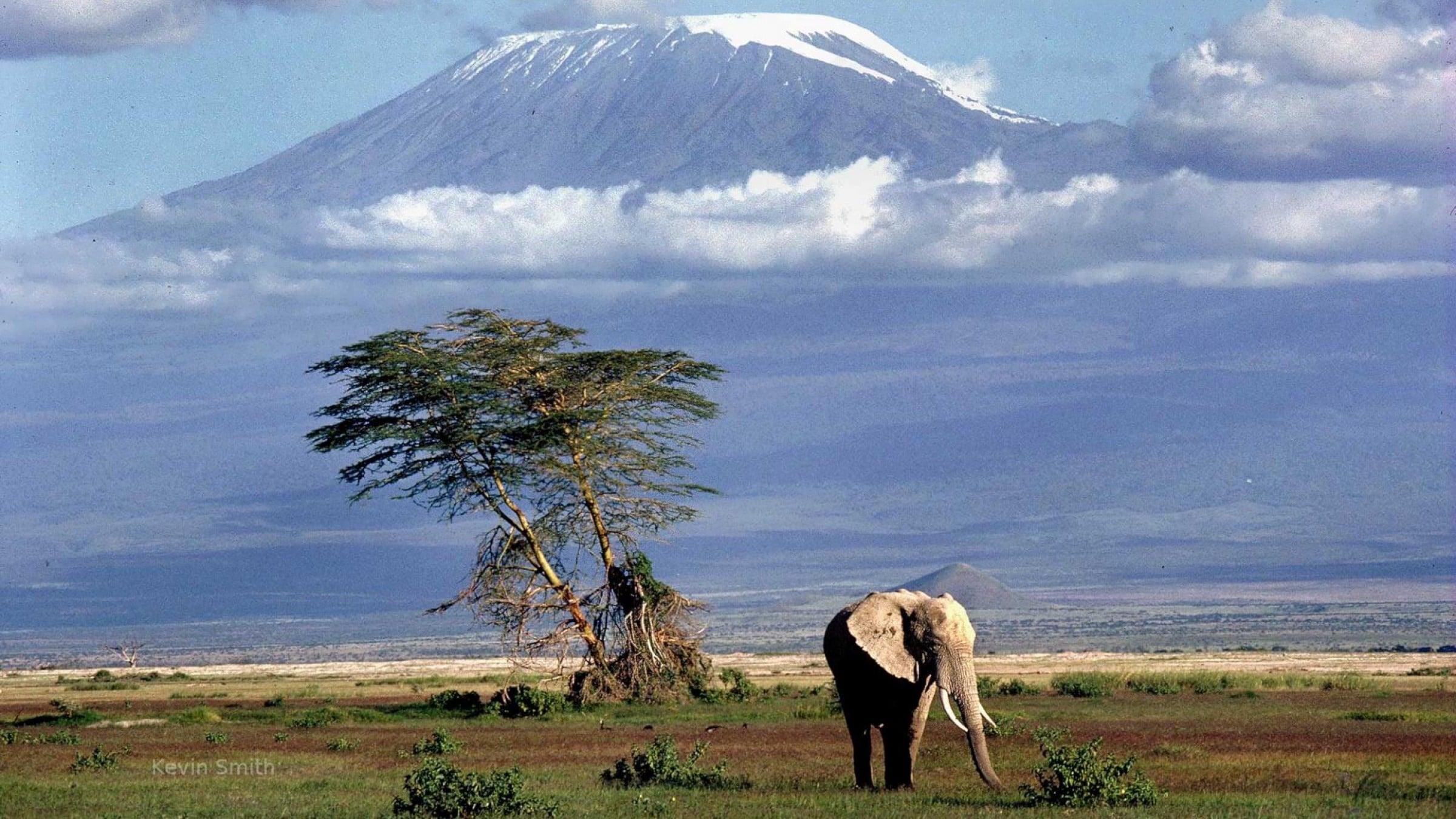 Elephant, Kilimanjaro