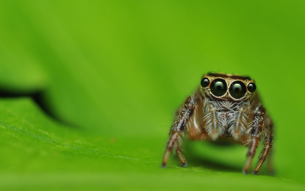 Multiple gaze of spider
