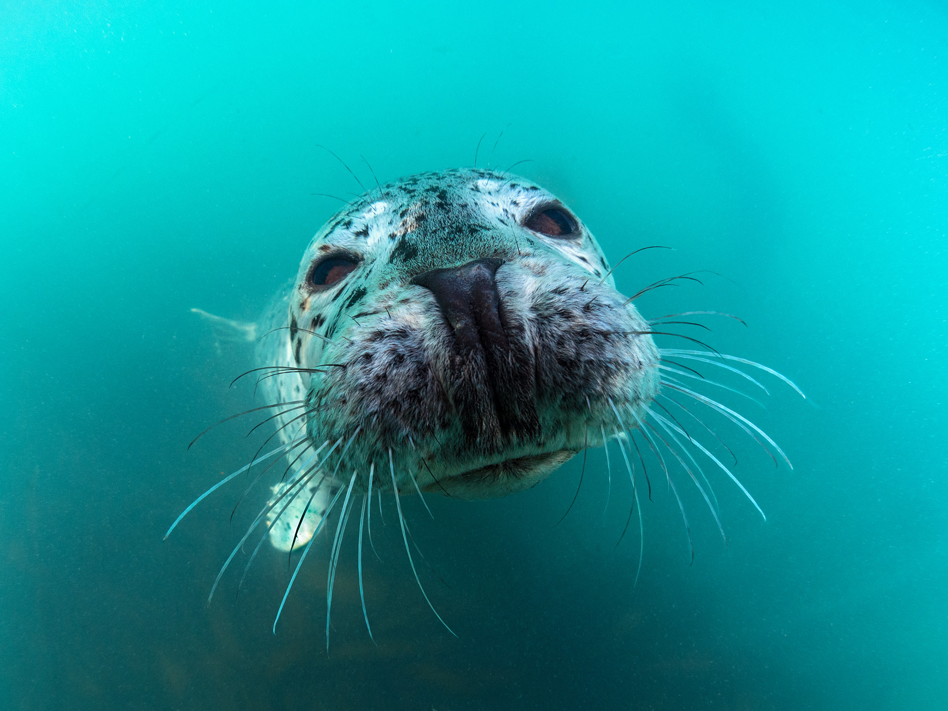 Portrait of a seal