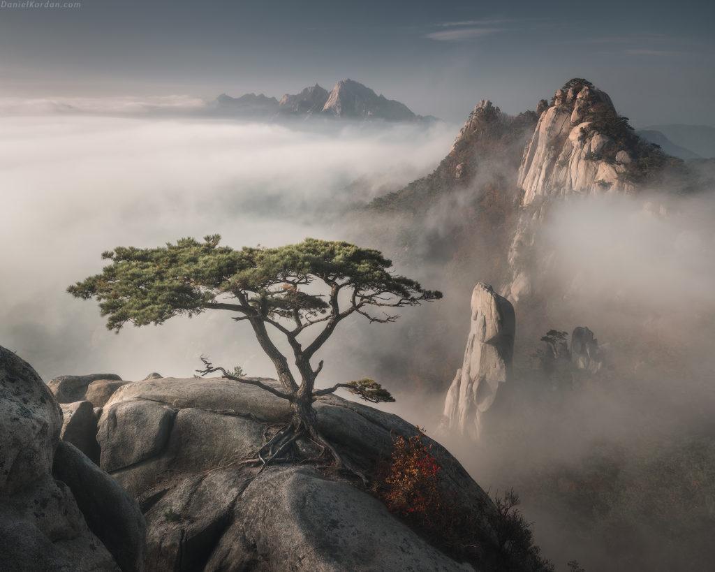 Bonzai, Korea