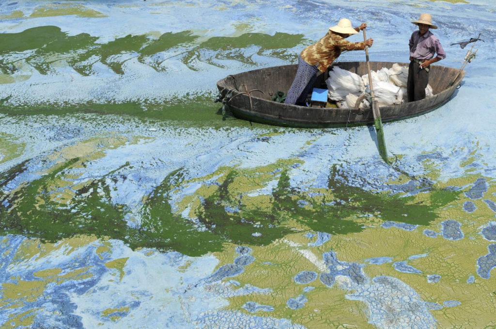 Fishermen row a boat in the algae-filled Chaohu Lake, China