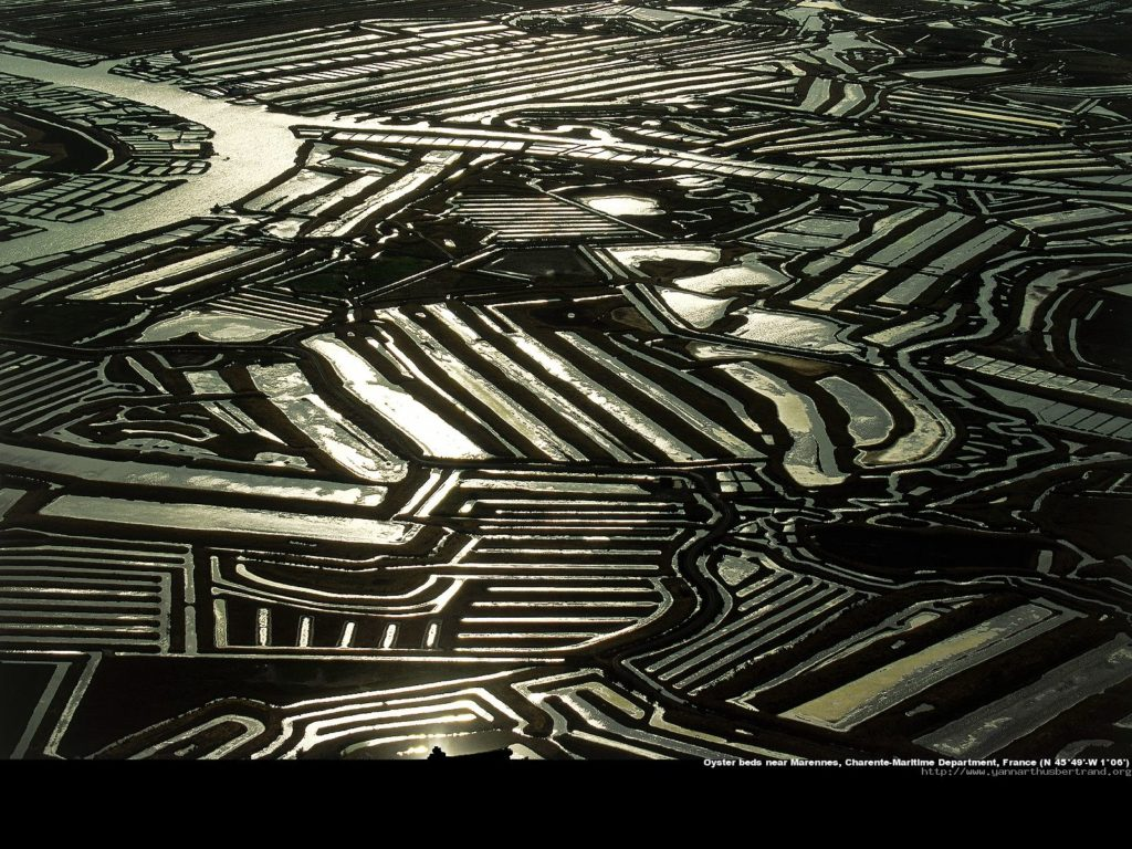 Oyster beds, Marennes, France