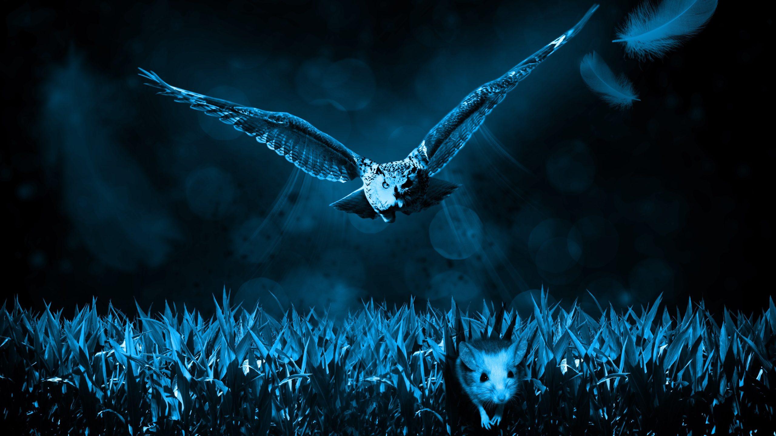 Bird night