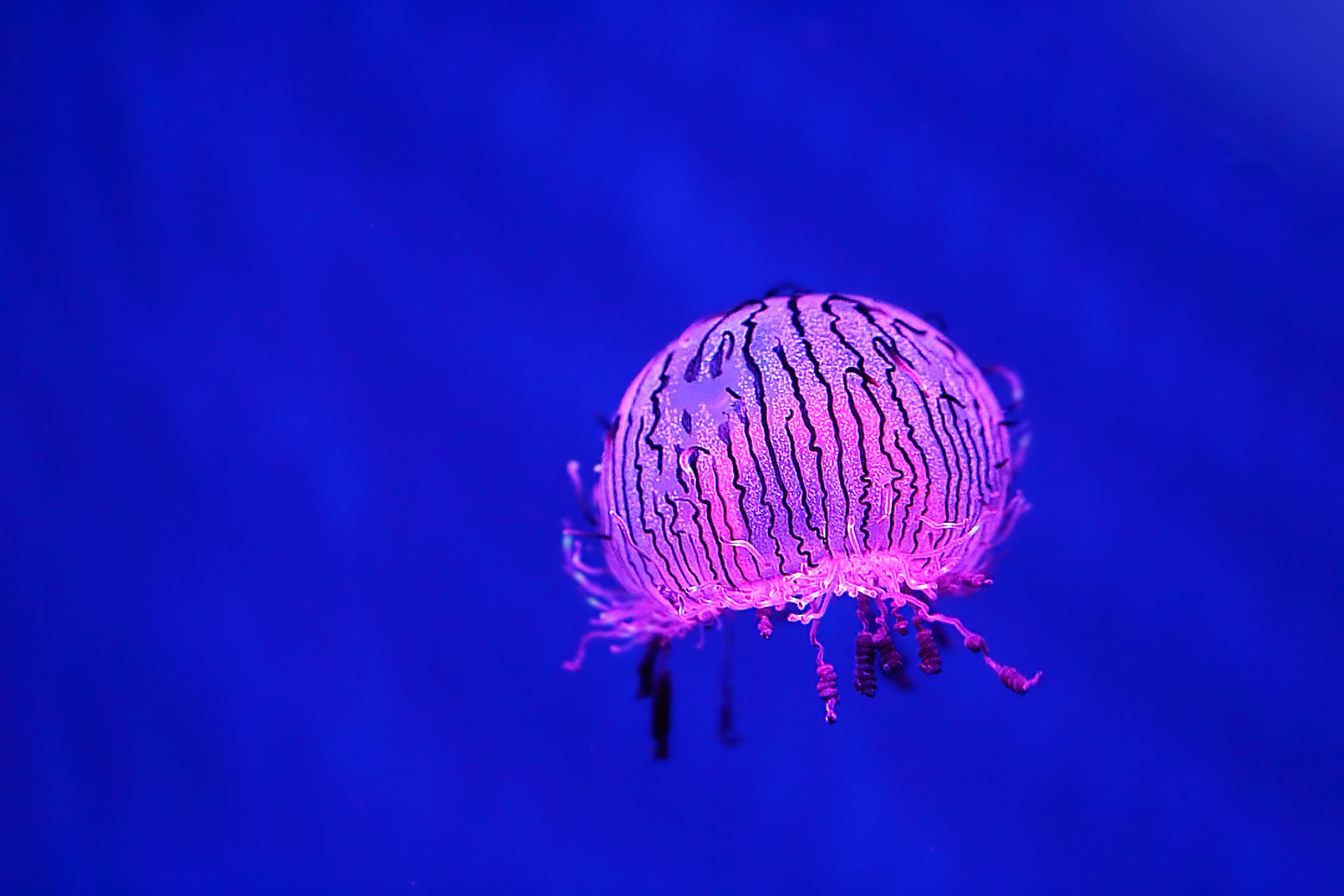 Jellyfish Flower Hat