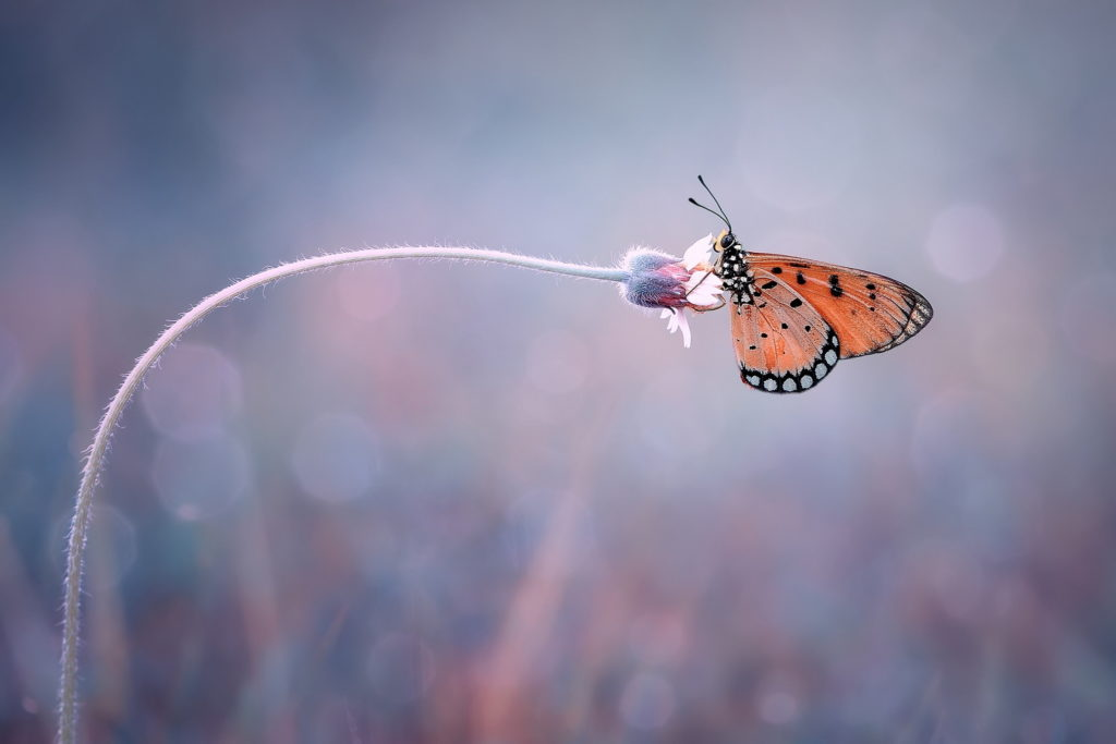 Butterfly on the bent flower