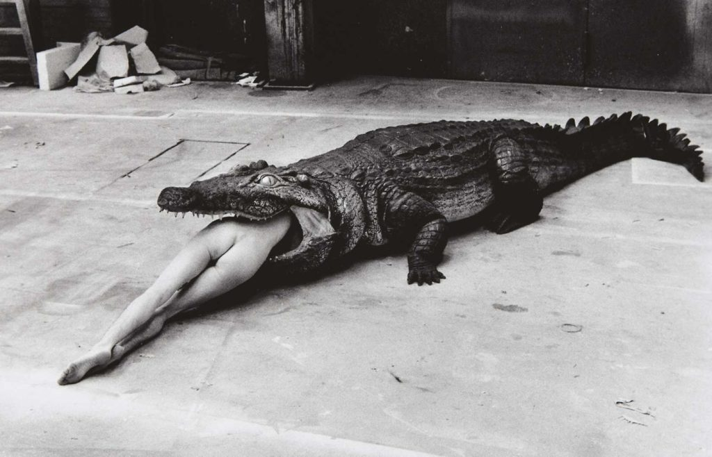 Crocodile eating Ballerina