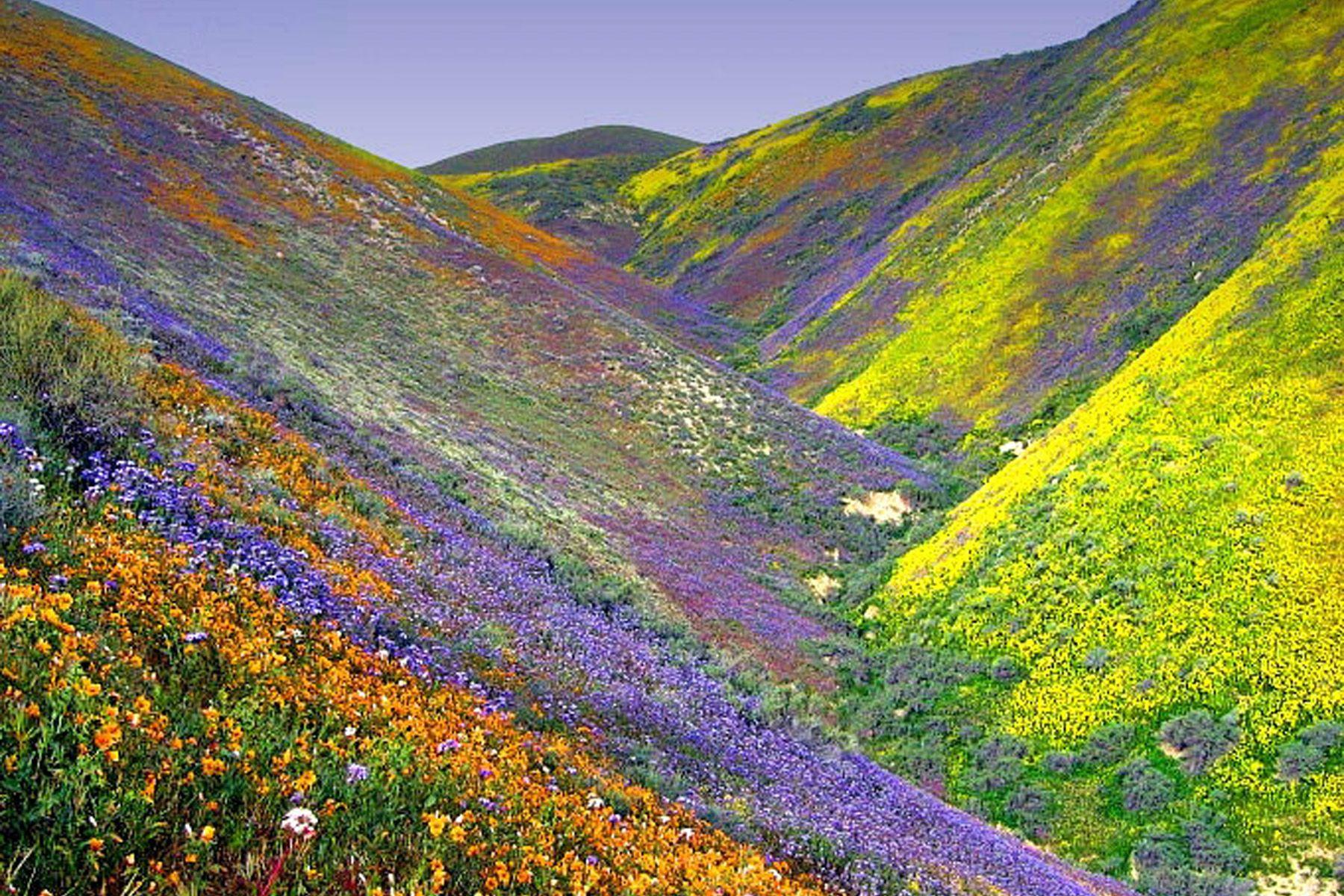 Valley of flowers, Uttarakhand, India