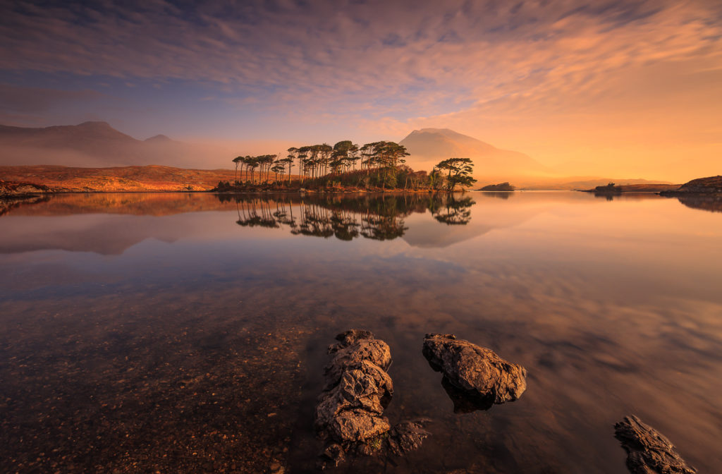 Pine Island, Connemara, Ireland