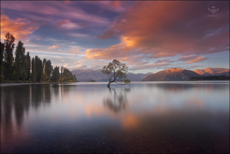 Tree, New Zealand