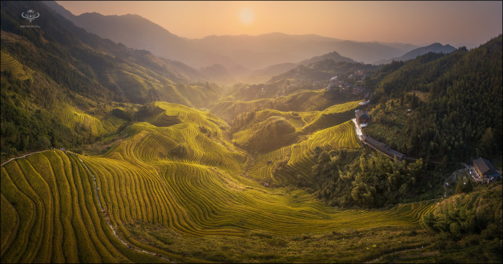 Rice terraces, China