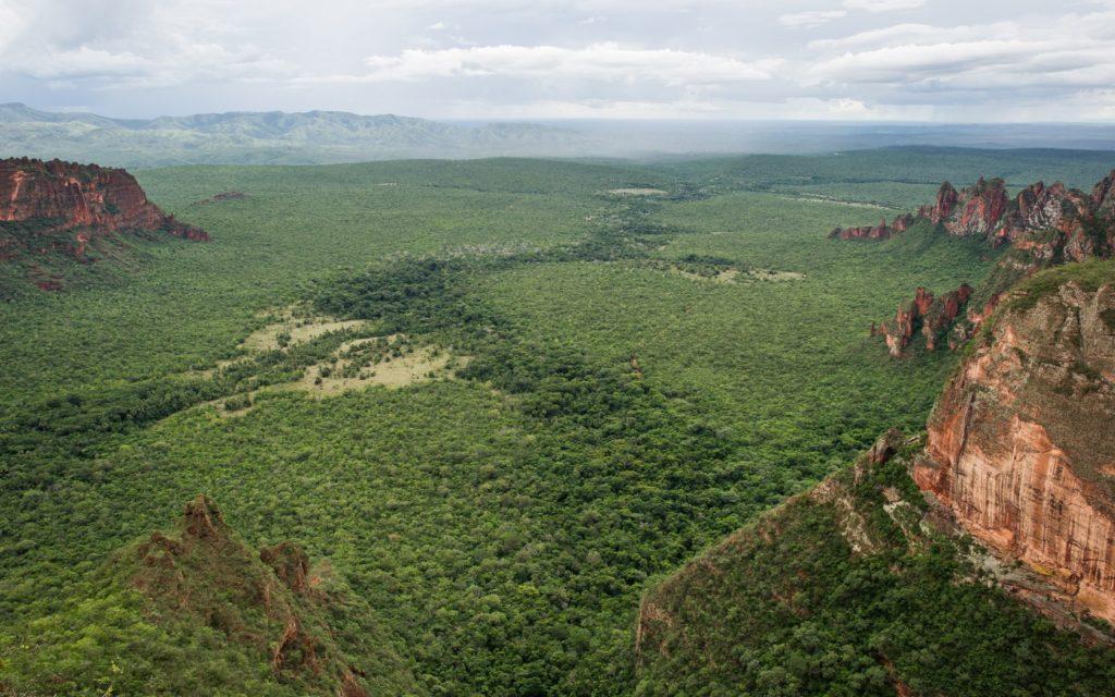 Forest landscape, Brazil