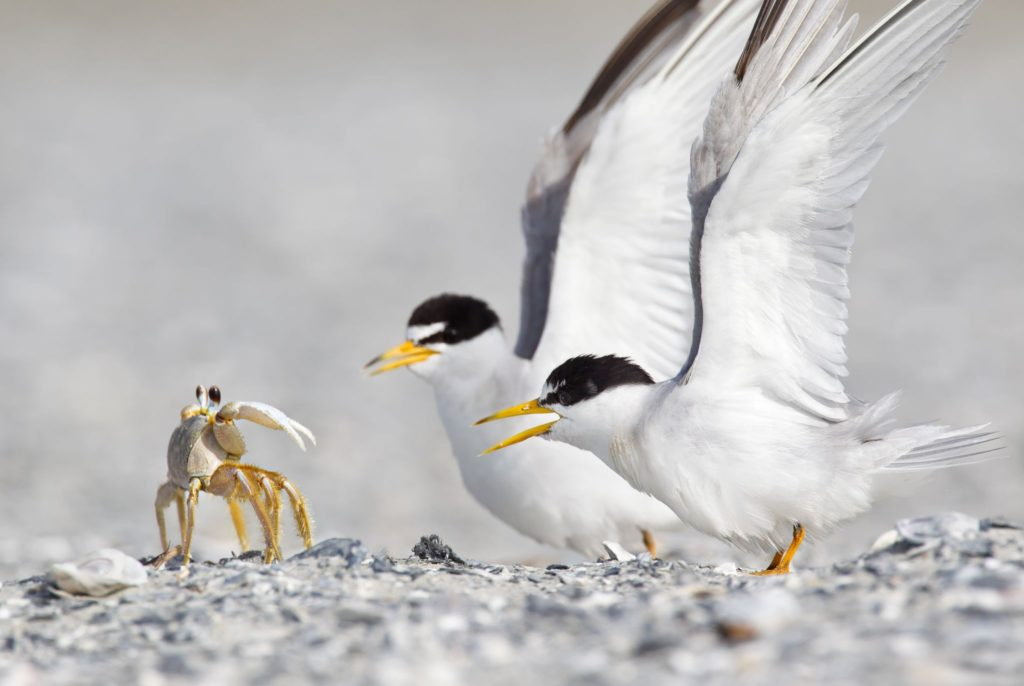Crab and birds